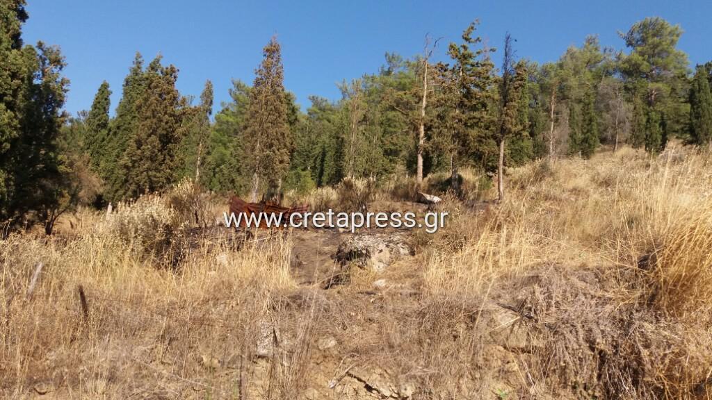 Στο τσακ γλίτωσε το δάσος στον Πύργο Μονοφατσίου (Φωτογραφίες)