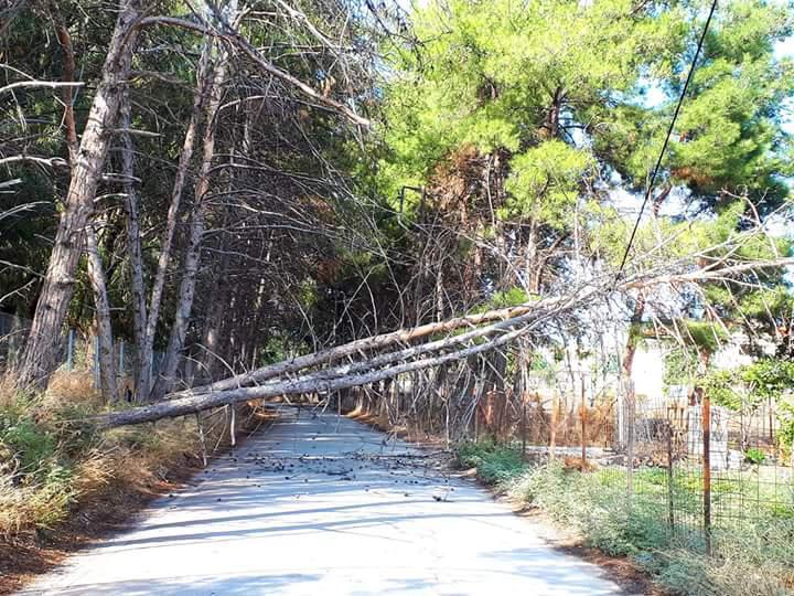 Ηράκλειο: Έπεσαν τα δέντρα έξω από το Δασαρχείο στο Lido