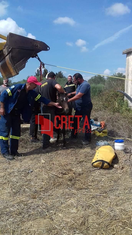Πραιτώρια: Διάσωση πουλαριού που έπεσε σε πηγάδι (φώτο και βίντεο)