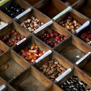 Συσκευασία παραδοσιακών σπόρων σήμερα στον Πύργο Μονοφατσίου