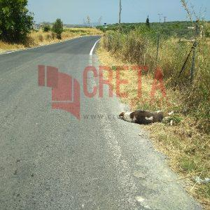 Πόσες φορές δεν έχουμε δεις στους δρόμους σκοτωμένα ζώα;