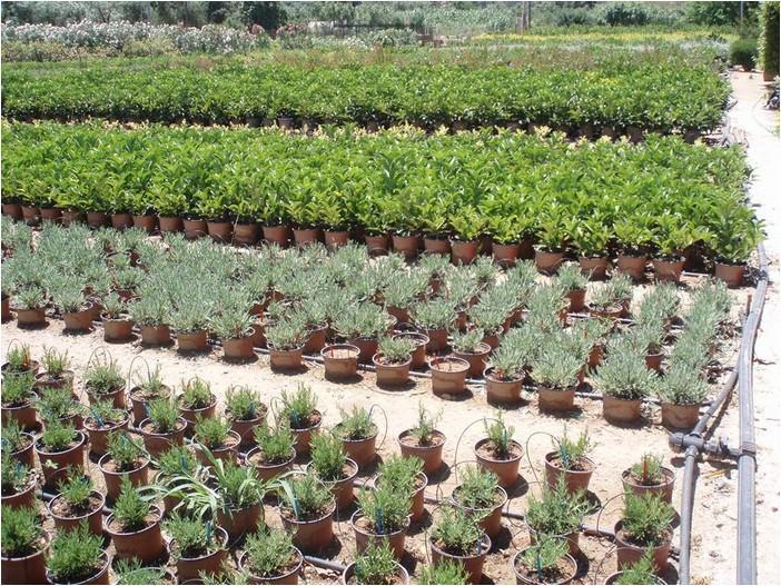 Δείτε ποιοι δικαιούνται δωρεάν φυτά από το δασικό φυτώριο Φοινικιάς