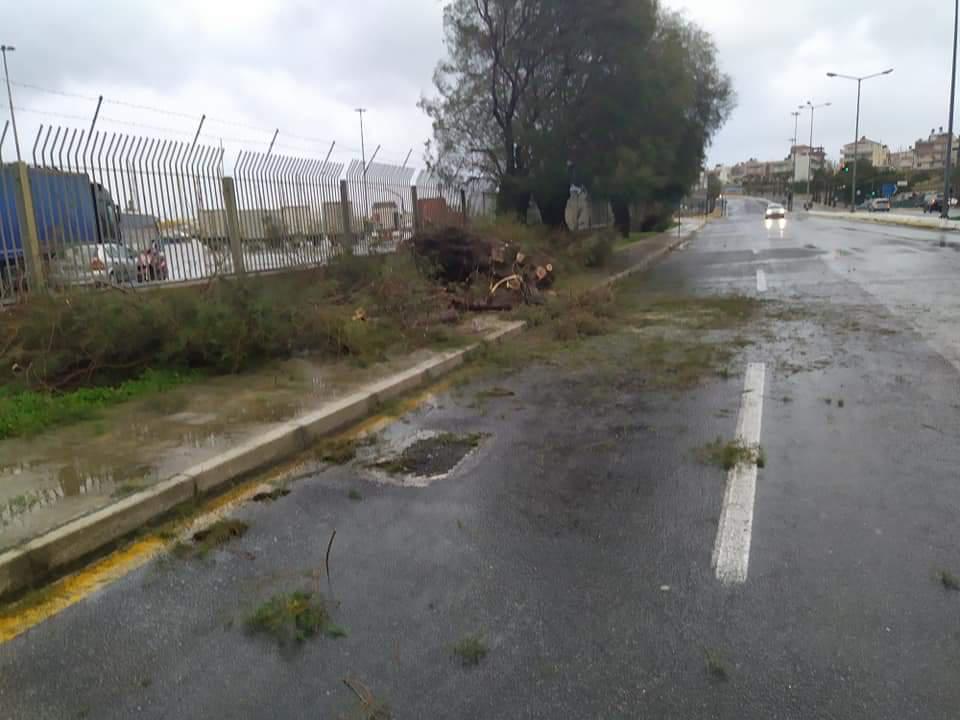 Ηράκλειο: Ξεπατώθηκαν αλμυρίκια στην παραλιακή από τον αέρα
