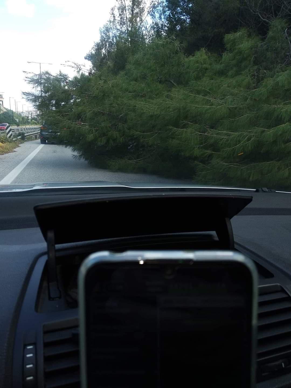 Δέντρο έπεσε και έκλεισε το ένα ρεύμα της εθνικής οδού στο ΒΟΑΚ